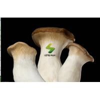 Wholesale Fresh foods Fresh King Oyster Mushroom from china suppliers