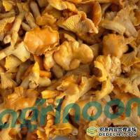 Buy cheap Brine Chanterelle Mushroom from wholesalers