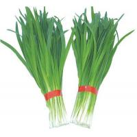 Buy cheap Fresh foods/products  leek from wholesalers