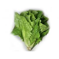 Buy cheap Fresh foods/products  lettuce from wholesalers