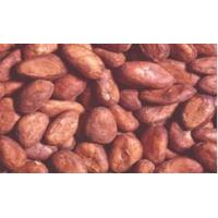 Wholesale Western Africa Cocoa Bean from china suppliers