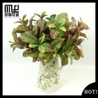 Downy magnolia Leaves-G00072 Manufactures