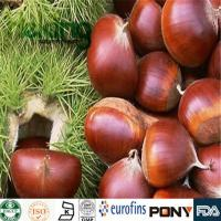 Wholesale Glycosides  Horse Chestnut Extract from china suppliers