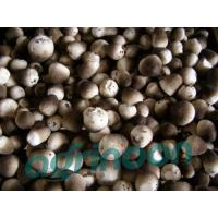 Wholesale Fresh Straw Mushroom from china suppliers