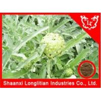 Wholesale Liver & Lung Health Artichoke extract cynarin from china suppliers