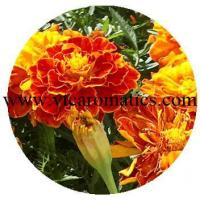 Wholesale Floral from china suppliers