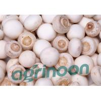 Wholesale Fresh Champignon mushroom from china suppliers