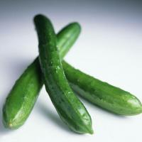 Wholesale Cucumber from china suppliers