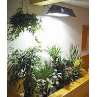 Buy cheap HED plant growth lamp from wholesalers
