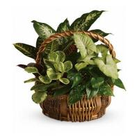 Buy cheap Mothers Day Emerald Garden Basket from wholesalers