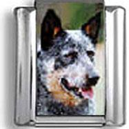 Buy cheap Animals Charms Australian Cattle Dog Italian Charm from wholesalers