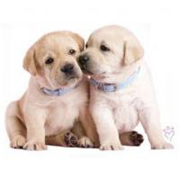 Buy cheap Animal T-shirts, Sweatshirts Dogs T-shirt For Kids Luke And Leia #11293HL6 from wholesalers