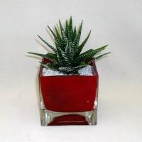 Wholesale Aloe in colored glass container from china suppliers