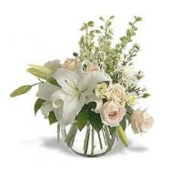 lily presentation Manufactures