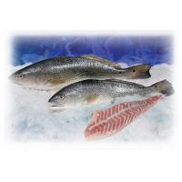 Wholesale Redfish / Red Drum from china suppliers