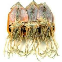 Wholesale HaioreumDried Wild Squid - 10pcs from china suppliers