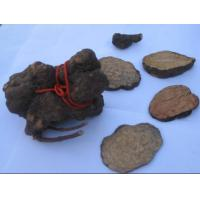 Wholesale Tuber Fleeceflower from china suppliers