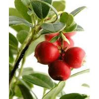 Wholesale CAMU CAMU from china suppliers