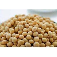 Wholesale Vegetables Soya Bean from china suppliers