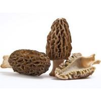 Wholesale Morel mushrooms grey morel mushrooms from china suppliers