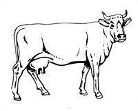 Buy cheap Cow Magnet from wholesalers