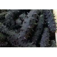 Wholesale Dried Sea Cucumber from china suppliers