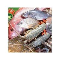 Wholesale Seafood dryer from china suppliers