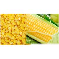 Wholesale Frozen Corn from china suppliers