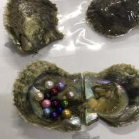 Wholesale Pearl Oyster Custom Color Pearls in Oysters from china suppliers