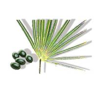 Wholesale Standardised Plant Extract Saw Palmetto Fruit Extract from china suppliers