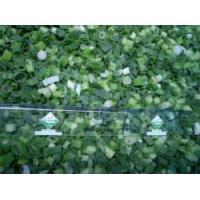 Buy cheap Frozen Spring Onion RC-HS-011 from wholesalers