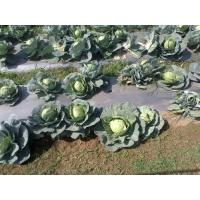 Buy cheap Mulching Film For Vegetable from wholesalers