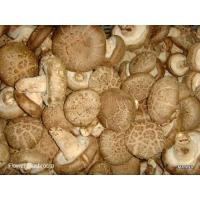 Wholesale Fresh Mushroom TC0101-01 from china suppliers