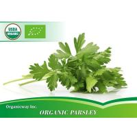Wholesale Organic Parsley from china suppliers