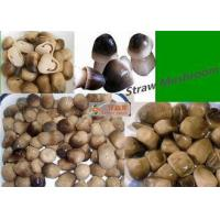 Wholesale 400g Canned Straw Mushroom In Tin White Yellow / Straw Mushroom In Brine from china suppliers