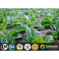 Wholesale Botanical extract |Stevia extract |Rebaudioside from china suppliers