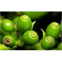 China Green coffee bean extract on sale