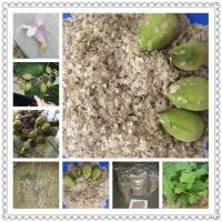 Wholesale Kiri seeds with phyto certificate from china suppliers