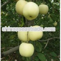 Buy cheap Agriculture Sweet and juicy White Apple Fruit product