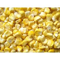 Wholesale FD Sweet Corn from china suppliers