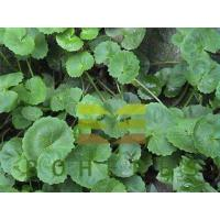Buy cheap Centella Asiatica Extract Powder Gotu Kola Extract for Skin Triterpenes 10% 20% from wholesalers