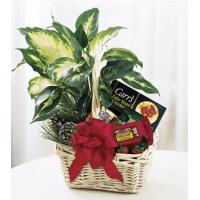 Buy cheap Holiday Hospitality Basket - B8-3730 from wholesalers
