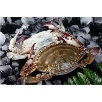 Wholesale Frozen Swimming Crab Whole Sale from china suppliers