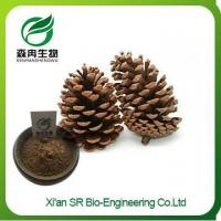 Wholesale Pine Nuts Extract, Factory Supply Hot Sale Pure Natural Pine Nut Powder from china suppliers