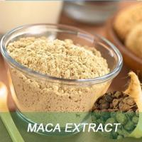 Best sell Sexual Enhancement natural Maca Extract Powder Maca root extract Manufactures