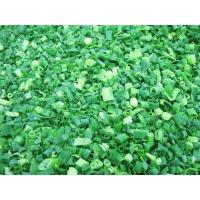 Buy cheap Green Onions from wholesalers