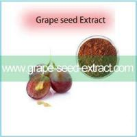 Best Pirce Grape Seed Extract Of Resveratrol CAS 501-36-0 With Excellent Quality