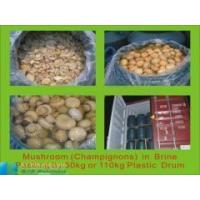 Wholesale canned mushroom and brined mushroom in drums from china suppliers