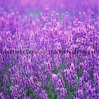 100% Natural Lavender Pollen Tablets
