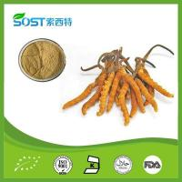 Buy cheap Herb Medicine Dong Chong Xia Cao Cordyceps Sinensis Extract Adenosine>0.2% Polysaccharides from wholesalers